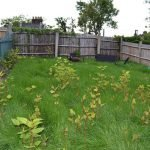 Sell a house with Japanese Knotweed- Mark King Properties