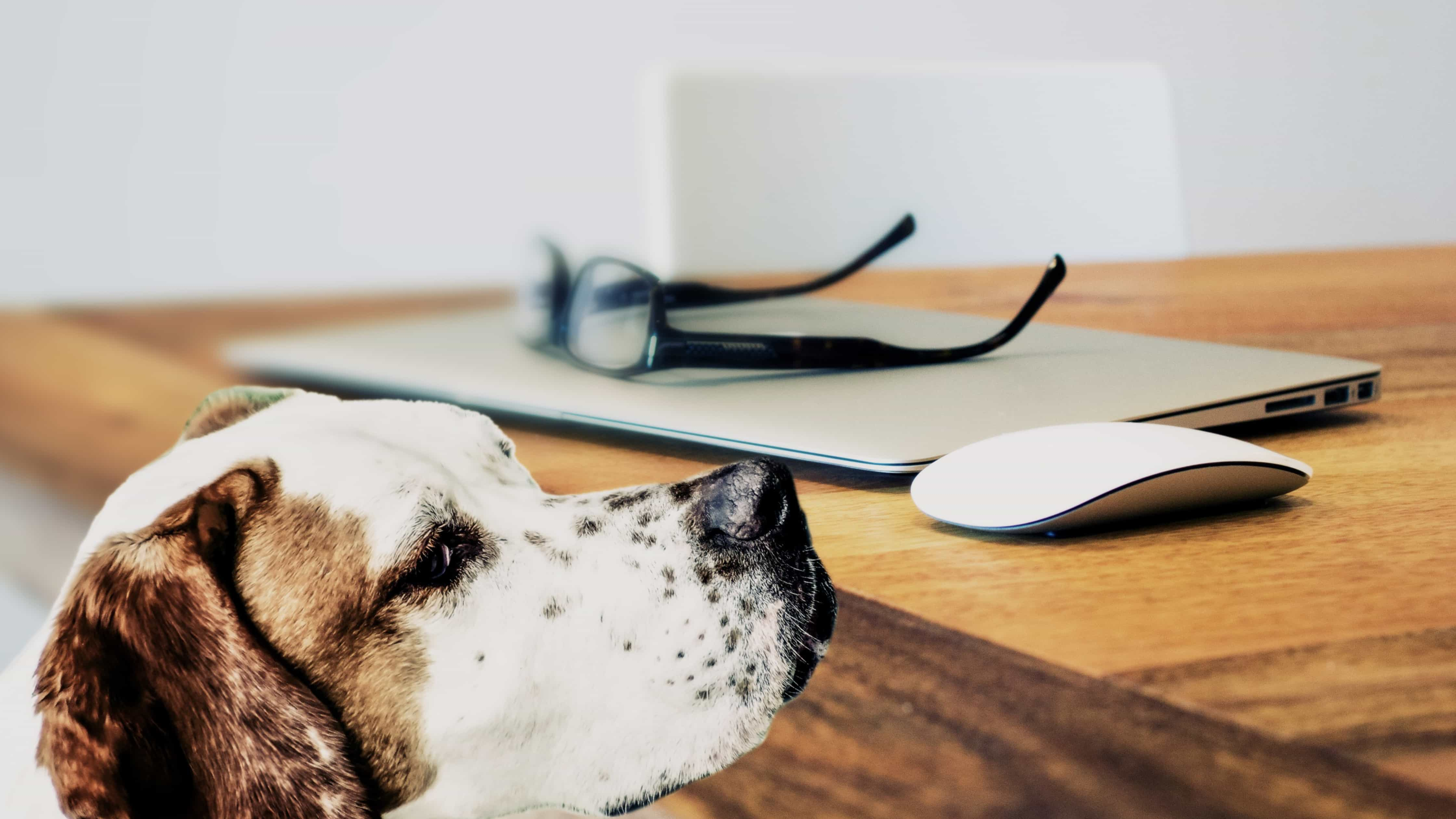 Dog in home sniffing at computer desk